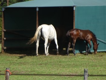Our equine guests