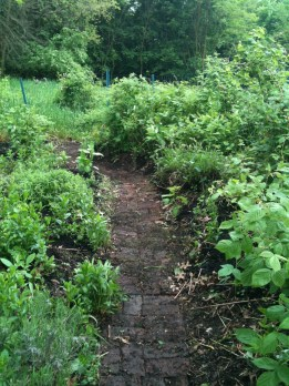 The berry/herb garden...lavender, rasberries, blackberries, sage, Greek oregano...
