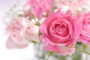 わたしらしさ開花コース バラ ピンク