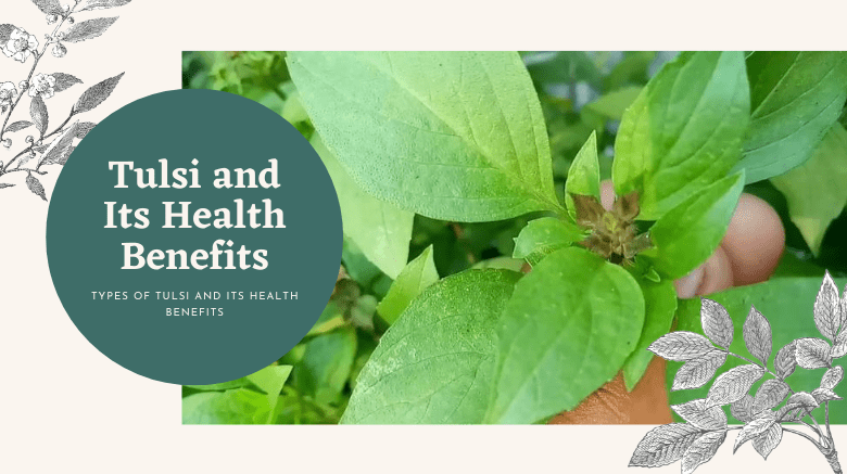 Types Of Tulsi and Its Health Benefits