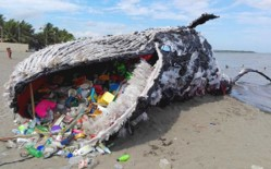 Toxic Plastics in Our Fish