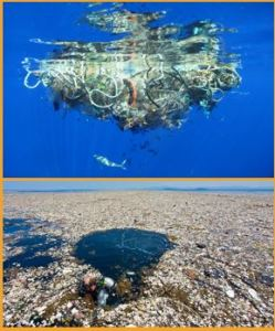 Recycle to Eliminate Toxic Plastics in our oceans