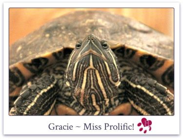 Gracie_website_photo