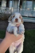 3.5 weeks old