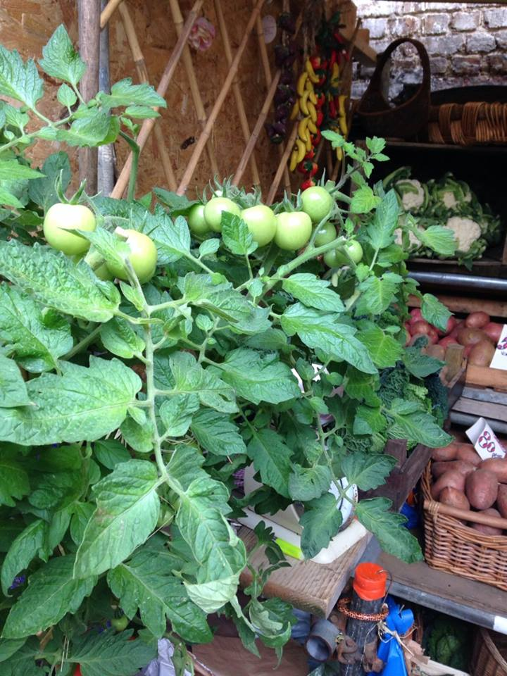 Are you eating these seasonal healing foods? | Healing Histamine