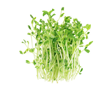 Bundle Of Fresh Pea Sprouts On White Background