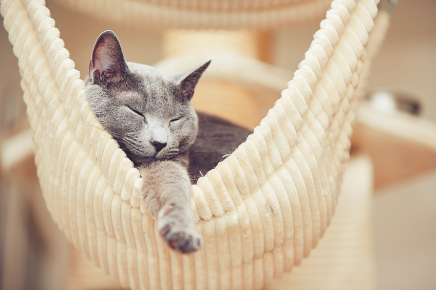 How Histamine Affects Sleep