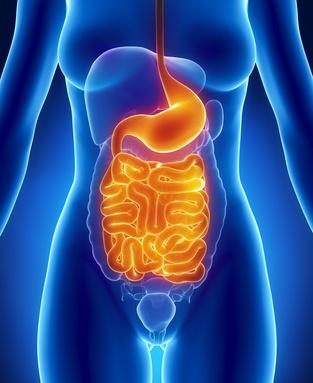 Female digestive system in blue xray