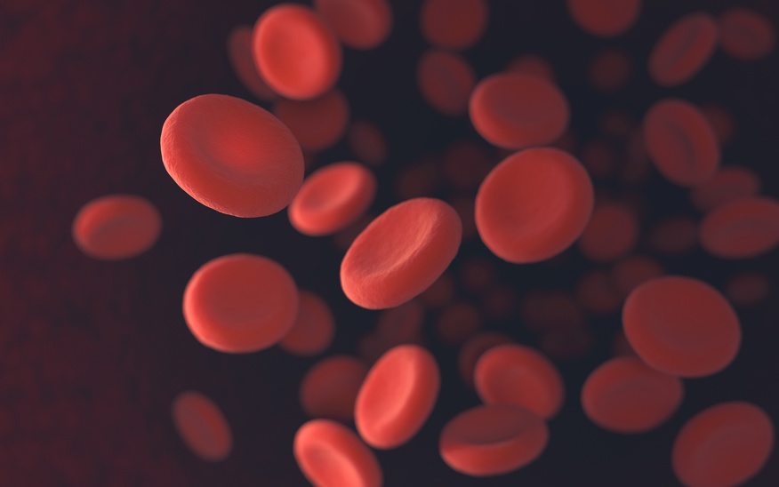 Red blood cells moving in blood vessels with depth of field.