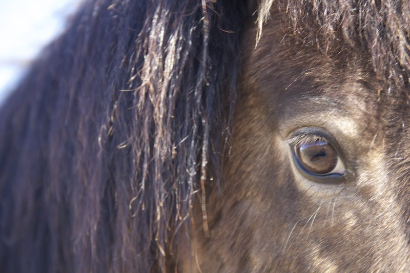 One (Horse) Step Removed: The Gentle Power of Being Indirect