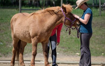 Q5: Who Should I Certify With in Equine and Animal Assisted Therapy?