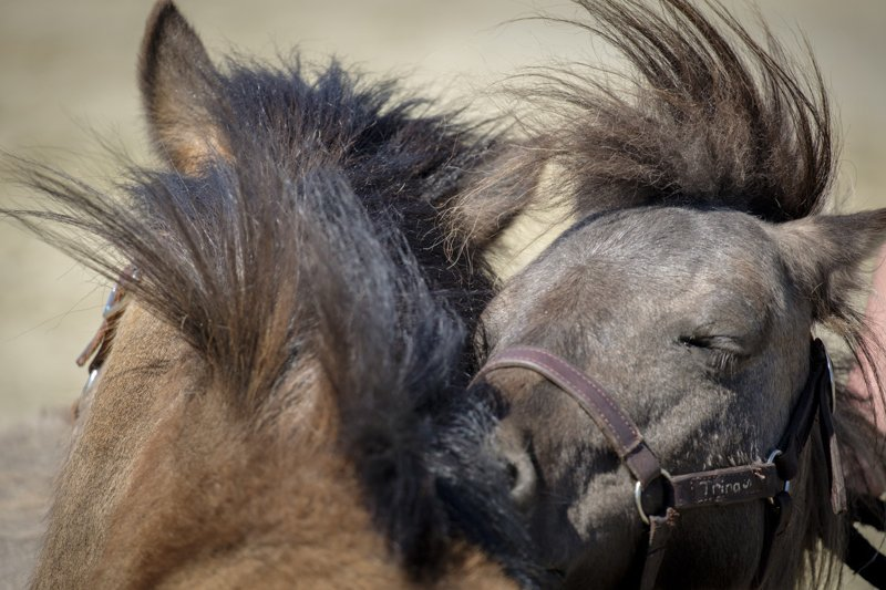 The Prodigal Pony – Part one