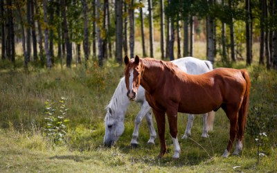 Q3: Do I Need My Own Horses or Facility to Work in Equine Therapy?