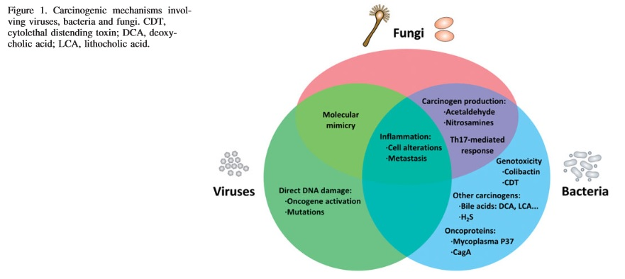 tumeric, curcumin, cancer fighting