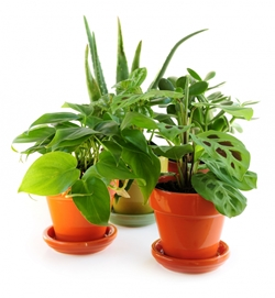 4 Cheap and Easy Ways to Reduce Indoor Air Pollution (in Your Home or Office)