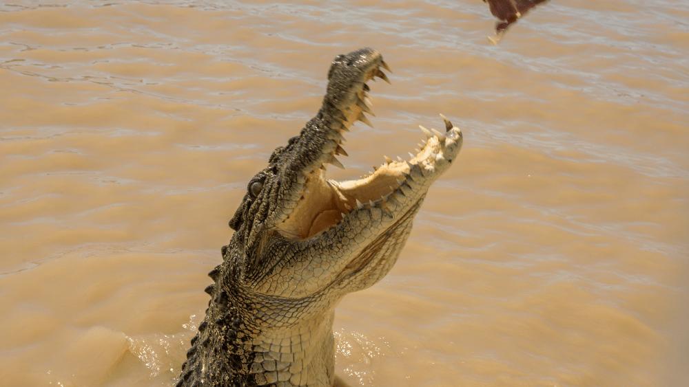 Jumping Crocodiles near Darwin