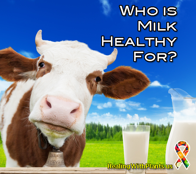 Is Milk a Healthy Food?
