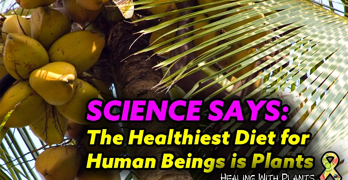 Science Says: The Healthiest Diet for Human Beings Is Plants
