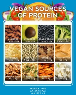 Vegan Sources of Protein Chart by Mercy for Animals