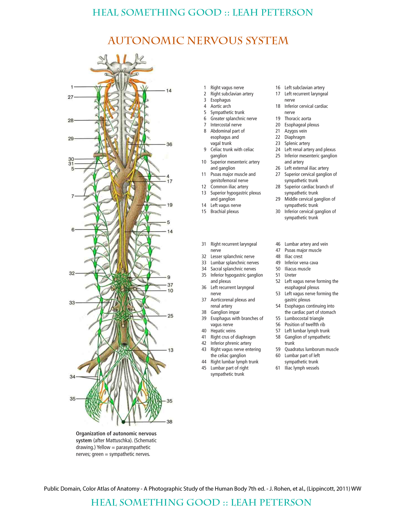 Chart Autonomic Nervous System Heal Something Good