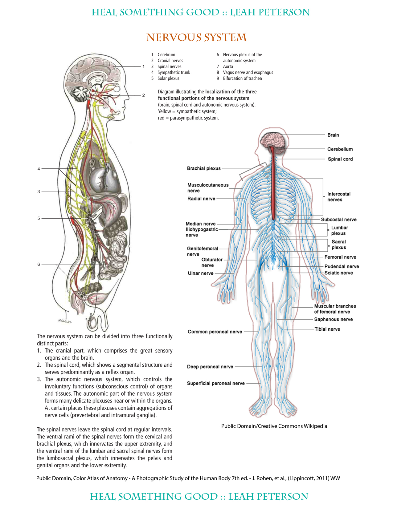Chart Nervous System Heal Something Good