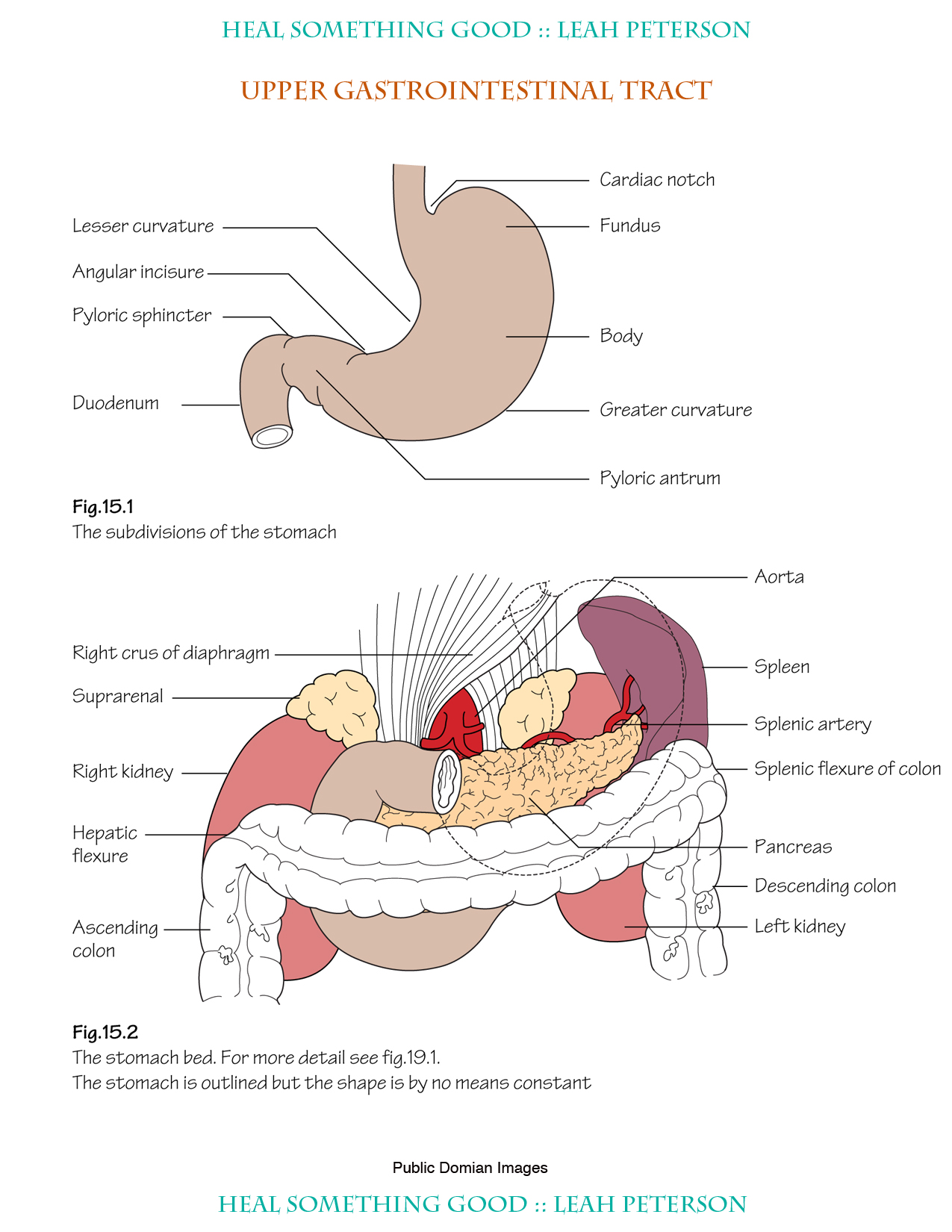 Chart Upper Gastrointestinal Tract Heal Something Good