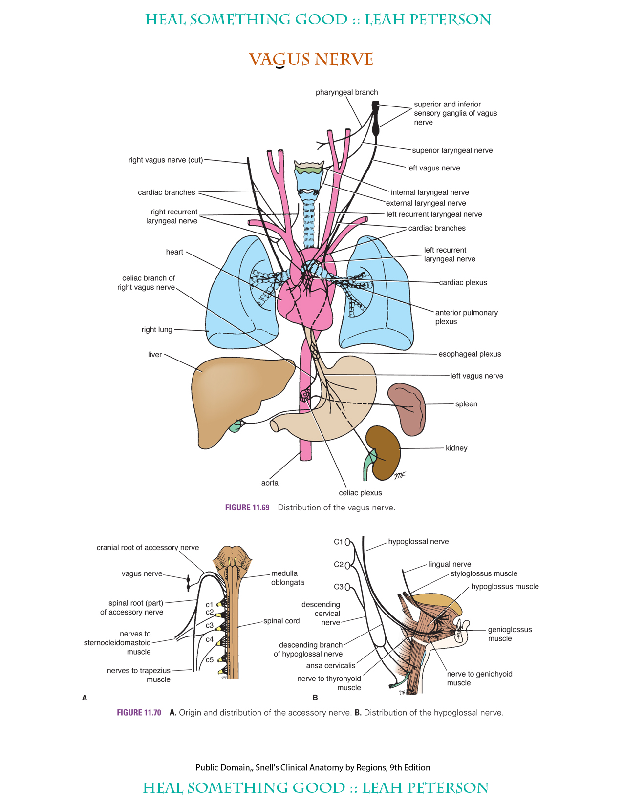 Chart Vagus Nerve Heal Something Good