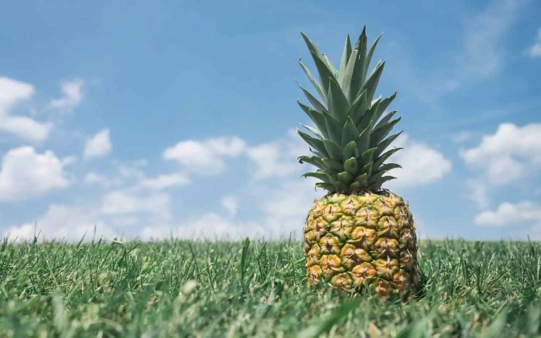 Ananas gesund