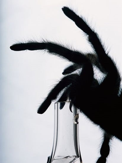 Tarantula venom illuminates electrical activity in live cells - neuroinnovations