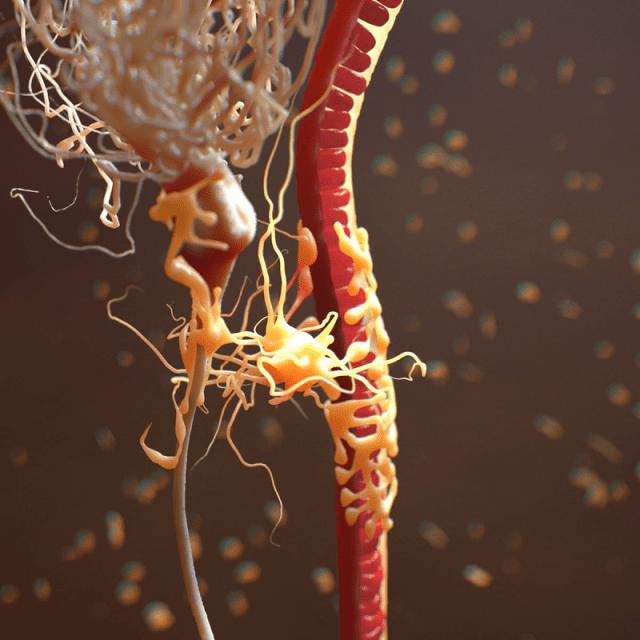 Neuron Astrocyte Blood Vessel realistic. By scyrus. © TurboSquid 2015