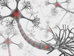 ft protecting-women-from-multiple-sclerosis-neuroinnovations