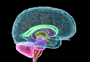 ft ui-researchers-stimulate-human-amygdala-to-gain-key-insight-into-sudep-healthinnovations