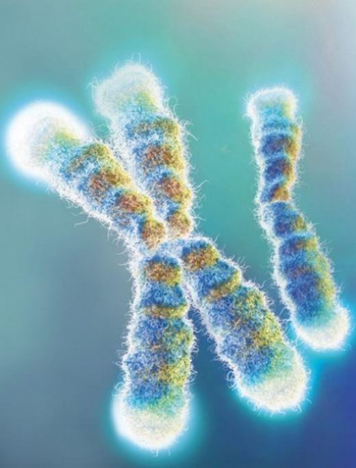 New method detects telomere length for research into cancer, aging - healthinnovations