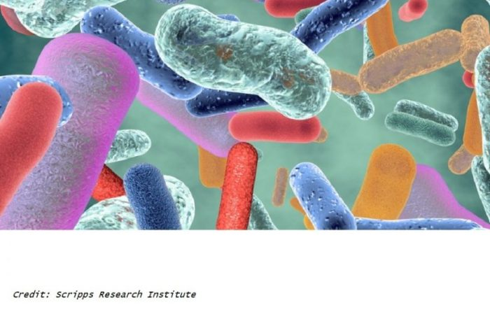 a study from researchers at the Scripps Research Institute develops molecules capable of reducing unhealthy gut bacteria to reverse the narrowing of arteries in an animal study. The team states their cyclic peptide molecules remodeled the mouse gut microbiota into a healthier state to reduce cholesterol levels strongly inhibiting atherosclerosis.