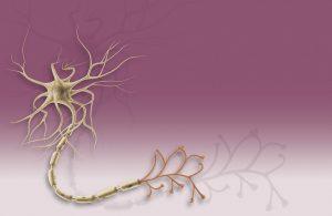 multipolar neuron