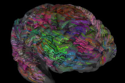 Brain-Dictionary-750x500-OPTION-2