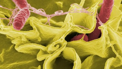 Study paves way for a new approach to fight infections