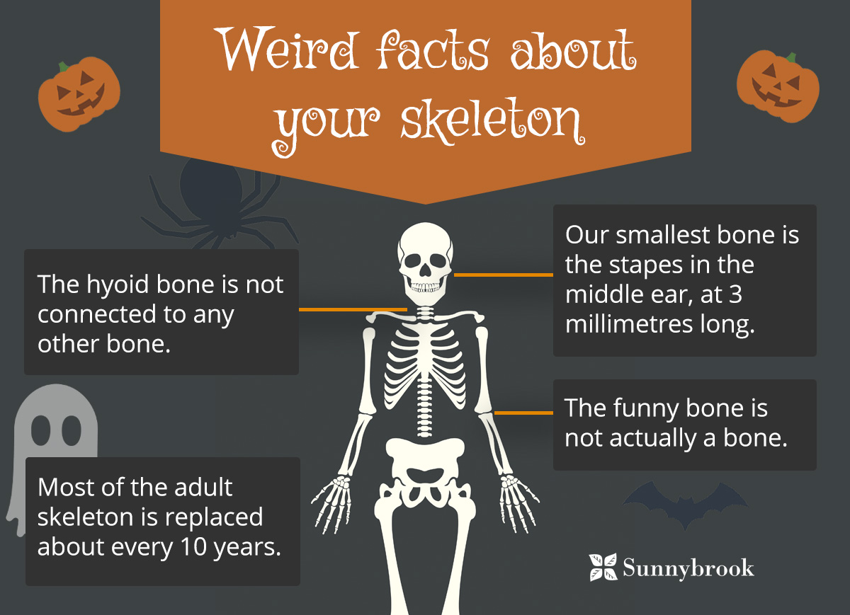 Weird Facts About Your Skeleton