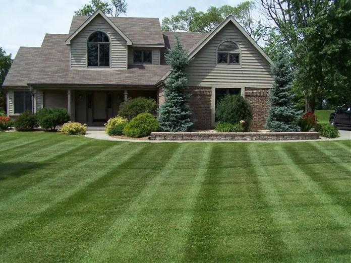 Healthy Looking Lawn