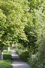 walkway in green space