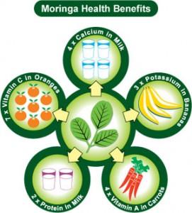 moringa benefits