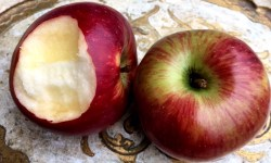 Herzhaft in den Apfel beißen. Kein Blut? dann hat es mit dem Parodontose vorbeugen geklappt.