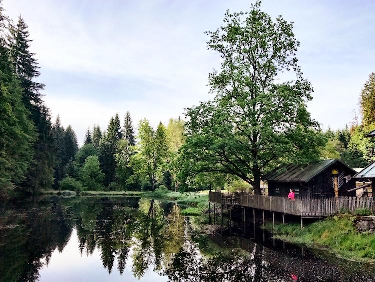 Gelassenheit lernen: Ein Waldspaziergang ist ein sehr guter Anfang