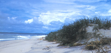 What we hope to see at Assateague Island National Seashore