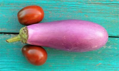 Long and Thick Penis