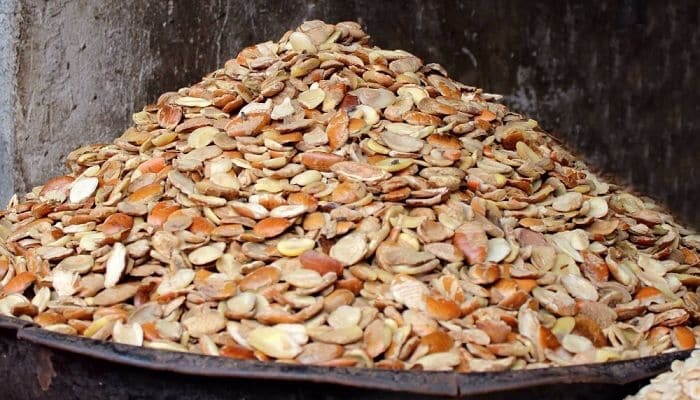 5 shocking health benefits of ogbono seeds