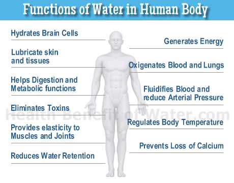 Functions of Water in Human Body