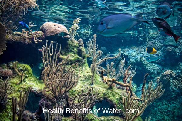 Seawater life