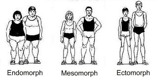 Mesomorph Endomorph Ectomorph Body
