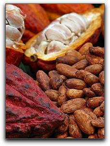 Great Tasting Artisan Chocolate In Punta Gorda